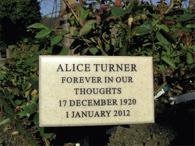 Image of rose bush and plaque