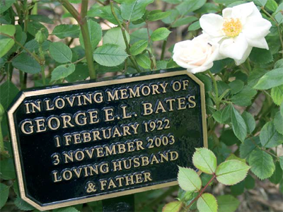 Image of white rose and bronze plaque